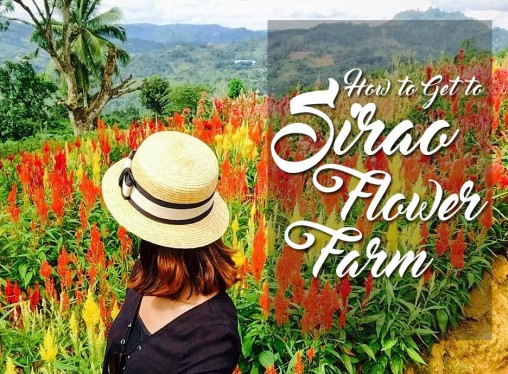 DIY Sirao Flower Farm